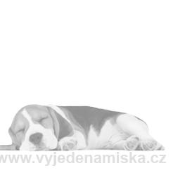 Happy Dog Supreme Medium Baby 28